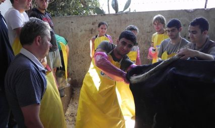 Milking Cow Breeding Sector Support